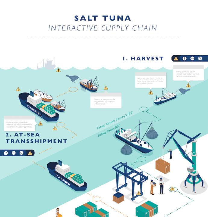 Tuna supply chain